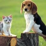 2544-caine si pisica copac polueaza