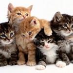 banner-pisici