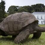ţestoasa gigant Jonathan, aflată pe Insula Sfânta Elena, a făcut pentru prima dată în viaţa ei baie