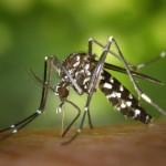 tantari-virus-zika-bucuresti-366471