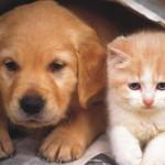 superstitii-caini-si-pisici-1024x640