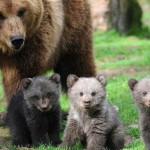 the-three-bears-680x365