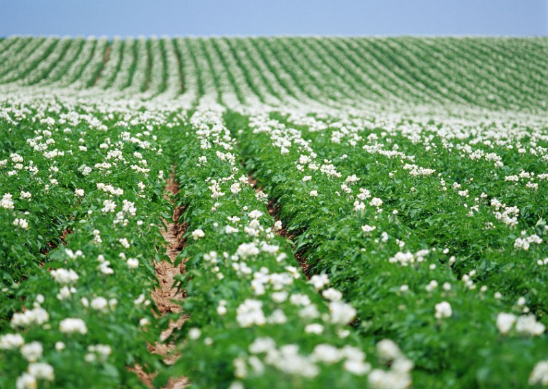 Foto: www.grupkms.ro