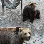 ursi gradina zoo tg mures - noaptea animalelor 2016 5