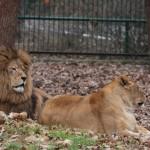 Foto: www.animalzoo.ro
