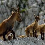 Foto: wildliferomania.com
