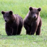 Sursa foto: www.grizzlyexperience.com imagine cu caracter ilustrativ