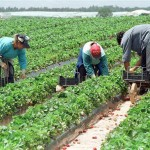muncitori agricultura