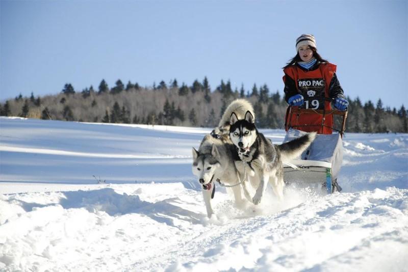 Sursa foto: kutyafogathajtas.green-zone.ro