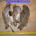 Foto: Politia Romana