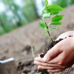 plantare-arbori-1170x550