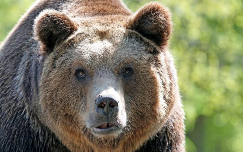 Sursa foto: www.annuaire-animaux.net