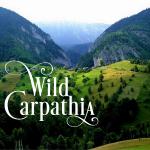 wild-carpathia