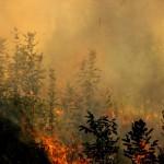 Pompieri-incendiu-vegetatie-martie-2017-5