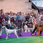 dracula dog show
