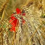 Foto: Agrointeligența