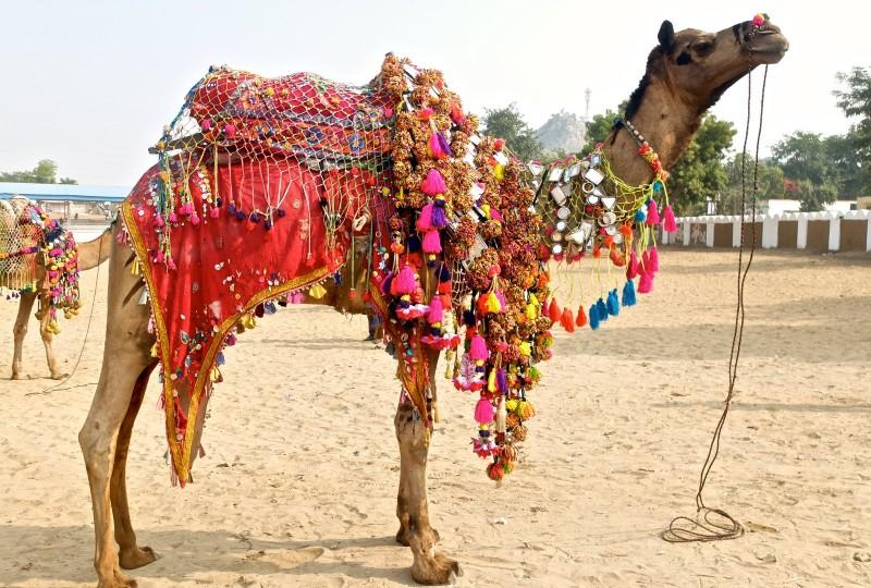 Sursa foto: indian holidays