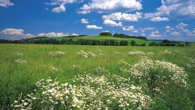 Sursa foto: Agrointeligența