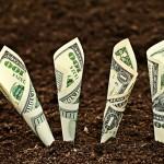money_soil_06668900