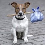 Foto: bundooravet.com