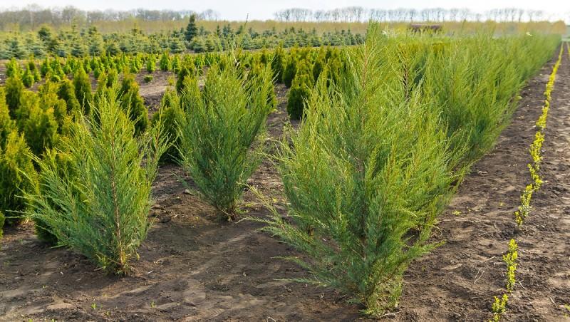 Foto: www.plante.md