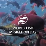 Sursa foto: worldfishmigrationfoundation.com)