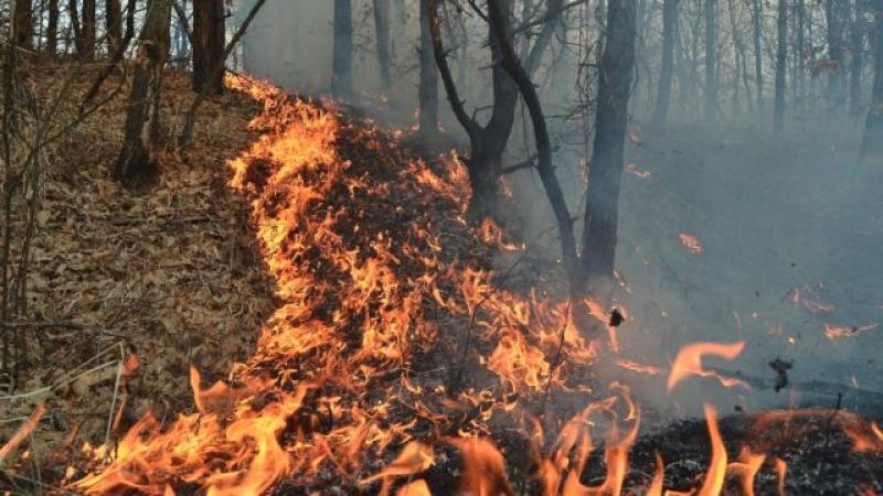 incendiu muntii-ciucas