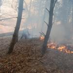 muntii rodnei incendiu vegetatie
