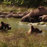 Foto: Libearty - Bear Sanctuary/facebook