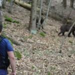 ursi (imagine ilustrativa)