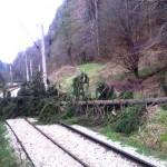 copac cazut cale ferata