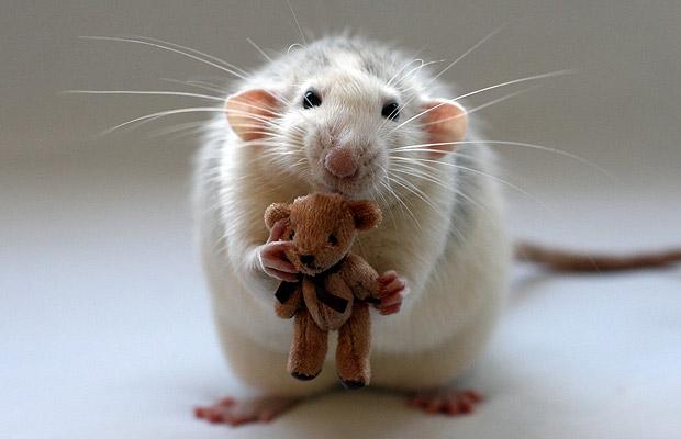 Sursa foto: animalworld.com.ua
