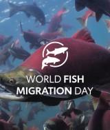 Sursa foto: worldfishmigrationfoundation.com
