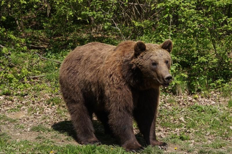 imagine cu cracter ilustrativ Sursa foto: facebook.com/Bear.Sanctuary