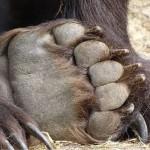 Foto: Libearty - Bear Sanctuary