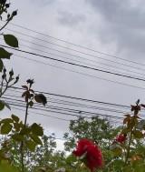 Foto: Radio Tg.Mures/Corina Muntean