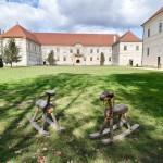 Castelul Banffy_Kallo_Angela